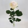 Rosa Rose einzeln