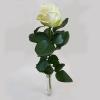 Weisse Rose einzeln
